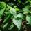 Cafe Planet: Örtvandring med ätliga vilda växter